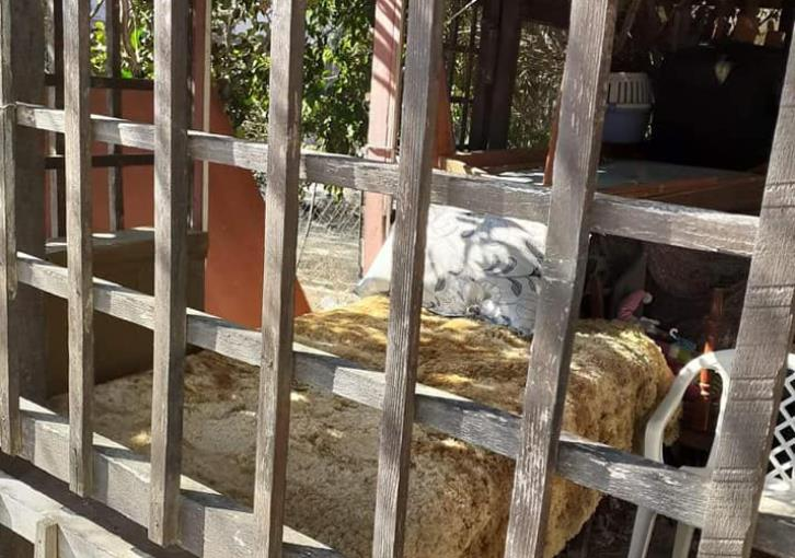 Limassol: NGO highlights plight of homeless man living in shed (photos)