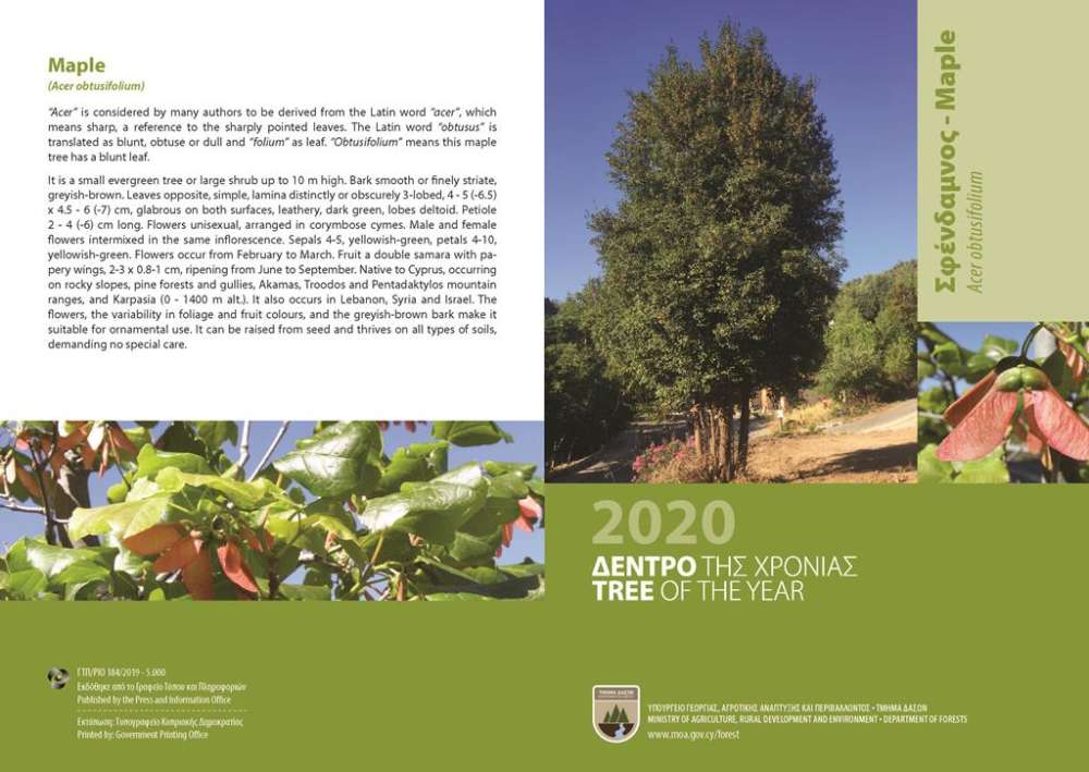Forestry Department celebrates the maple