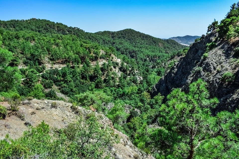Mountain, Forest, Pines, Trees, Landscape, Nature