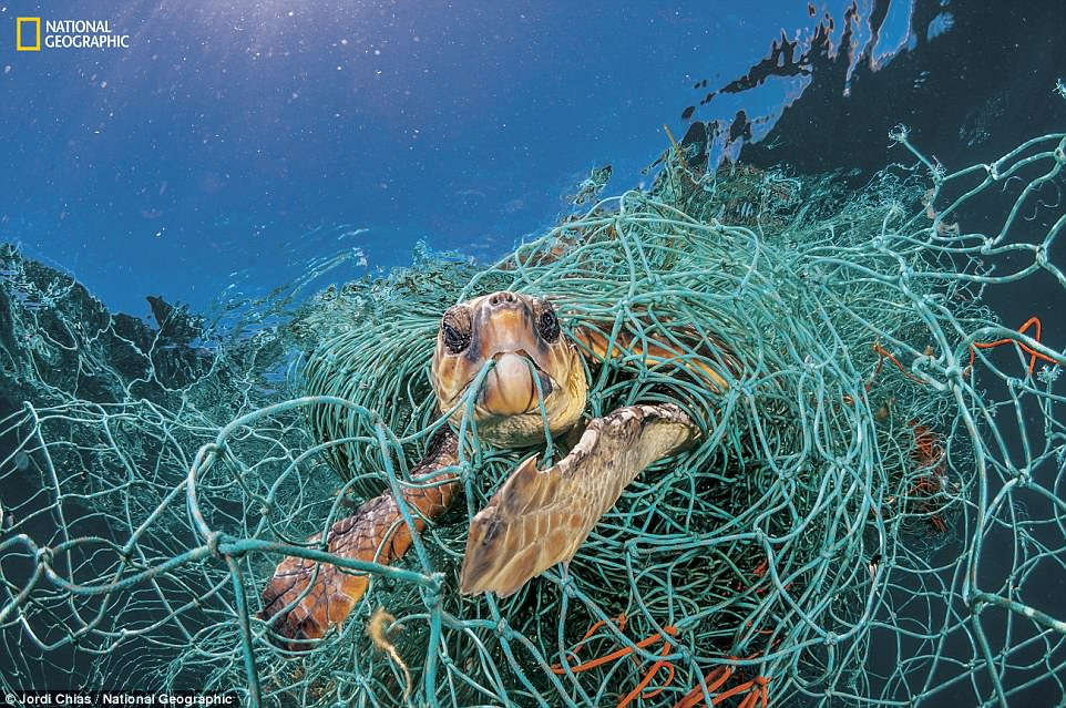 Heartbreaking images about the plastic crisis and its devastating impact on our ecosystems