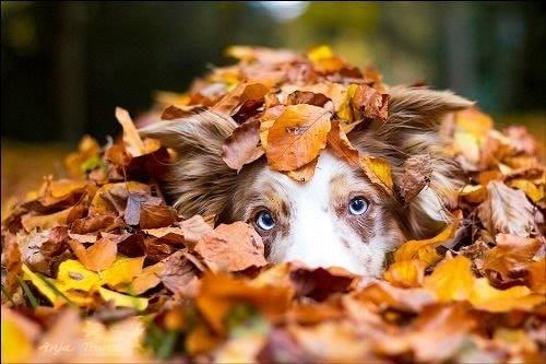 November Dog Walk