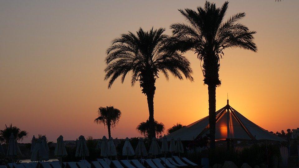 Palm Tree, Amazing, Sunset, Awesome, Nature, Landscape