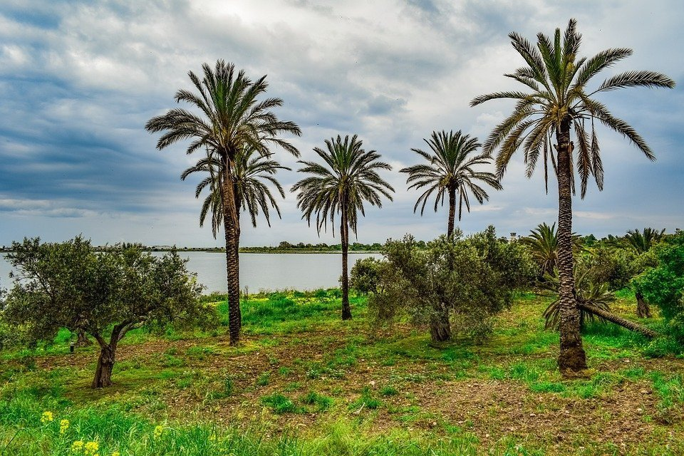Palm Trees, Trees, Landscape, Scenery, Nature, Meadow