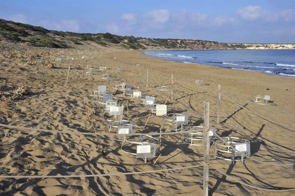 Umbrella war looms at Lara turtle beach