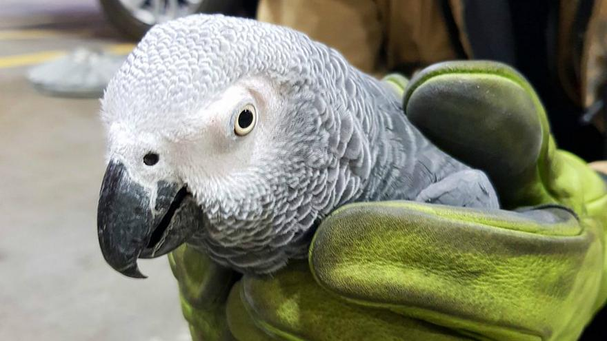 Dublin Airport seeks to reunite runaway parrot with owner