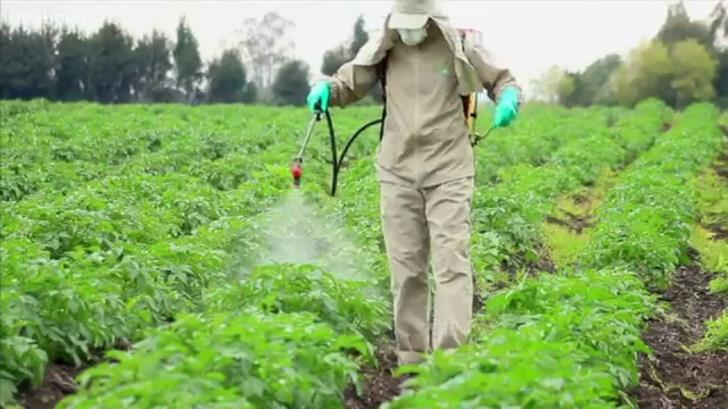 Paphos: Arrest warrant after discovery of prohibited pesticides
