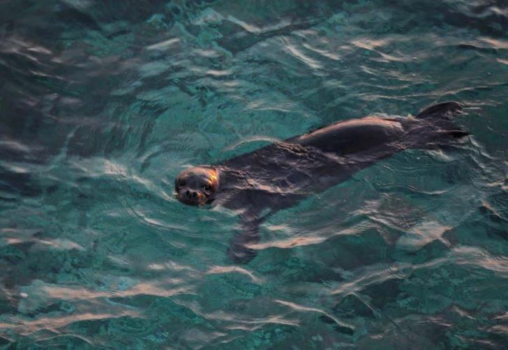 New born baby seal Triton makes a splash