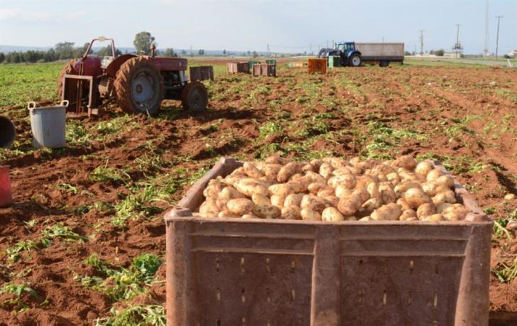 G/C side requests T/C potatoes
