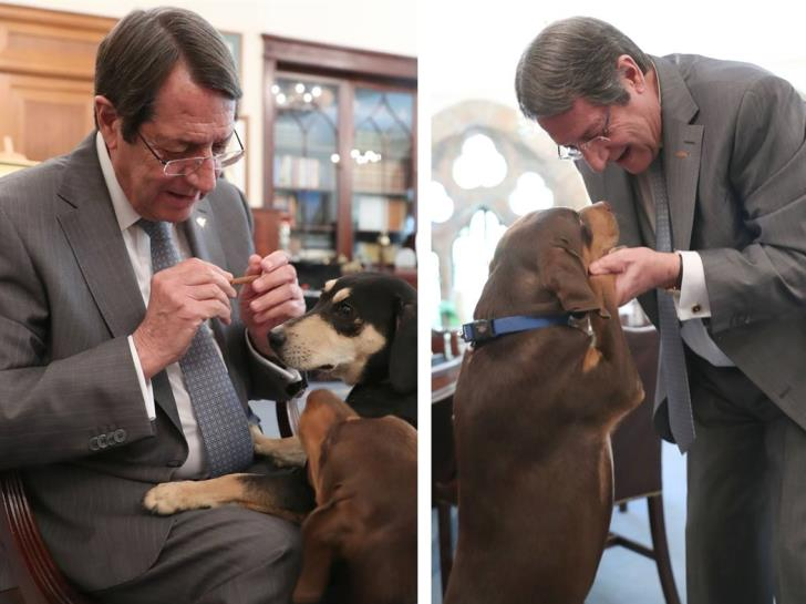 President and his dogs mark World Animal Day