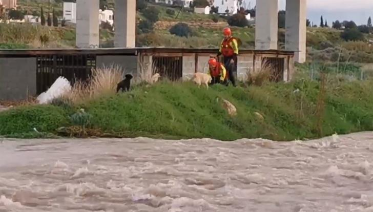 Fire services rescue trapped dogs (video)