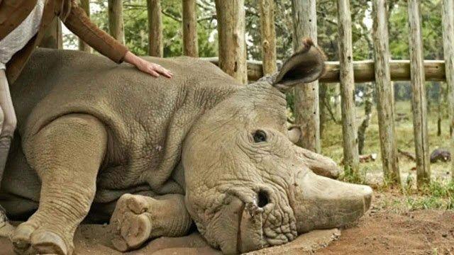 Scientists warn a million species at risk of extinction