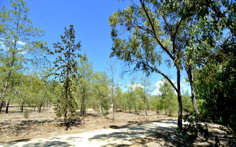 Rizoelia National Forest Park