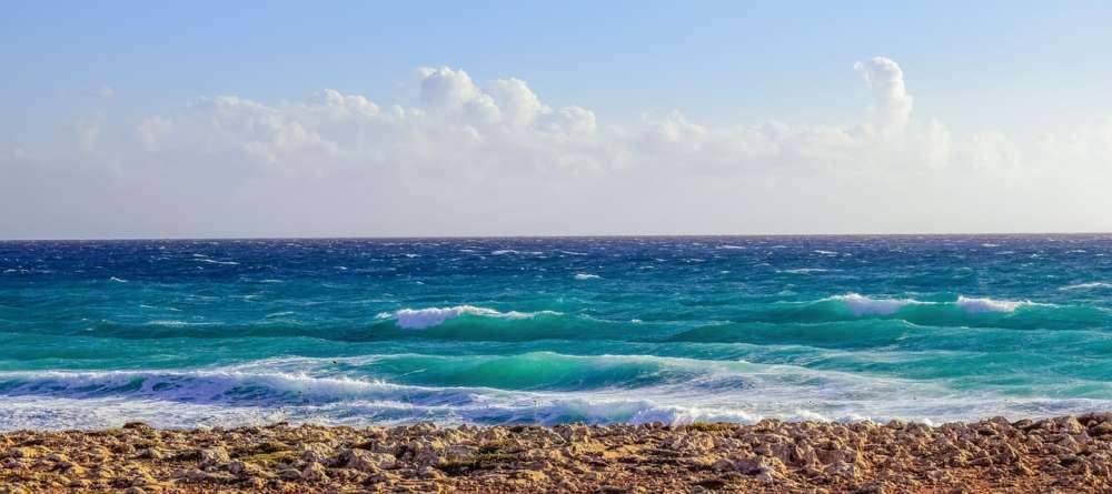 EU survey: increase in alien species in marine protected areas off Cyprus