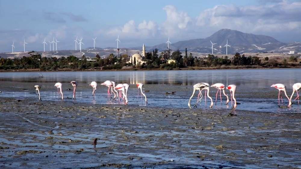 Larnaca Salt Lake