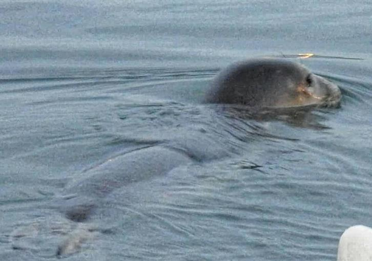 Seal makes brief appearance at Paphos harbour