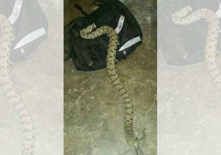 Venomous snake found in Limassol school yard