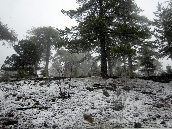 Weather forecast: roads closed in Troodos as unsettled weather continues