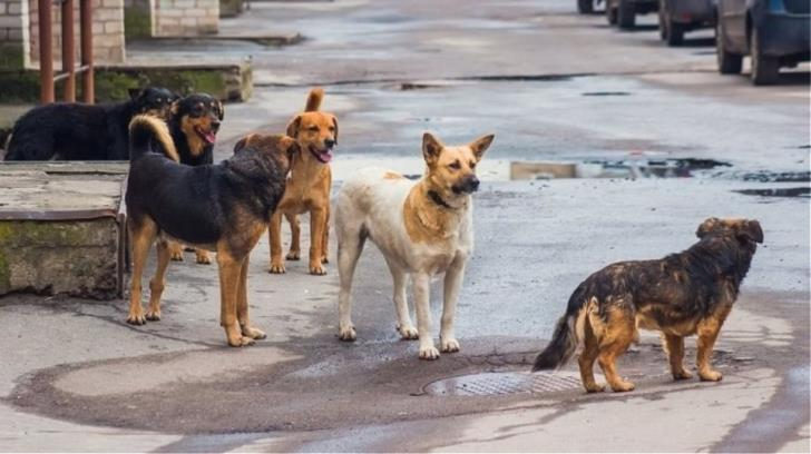 Aradippou Dog Shelter: 'State financial help is inadequate'