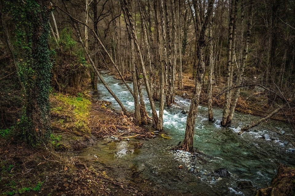 Stream, Creek, River, Scenery, Nature, Forest, Trees
