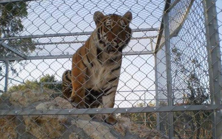 Animal Party Cyprus seeks answers over the fate of animals at Melios Zoo