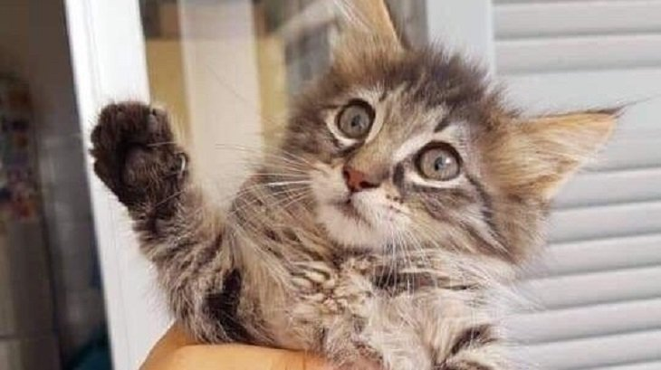Petition for airport animal handling area after kitten squashed to death in conveyor belt