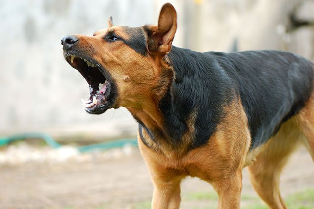 Dog barking convictions extremely rare