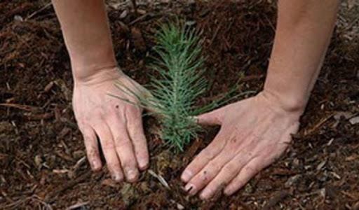 50 inmates to plant trees in Latsia