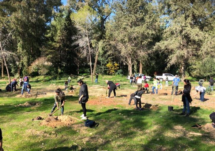 Tree-planting at Akadimias park (photos)