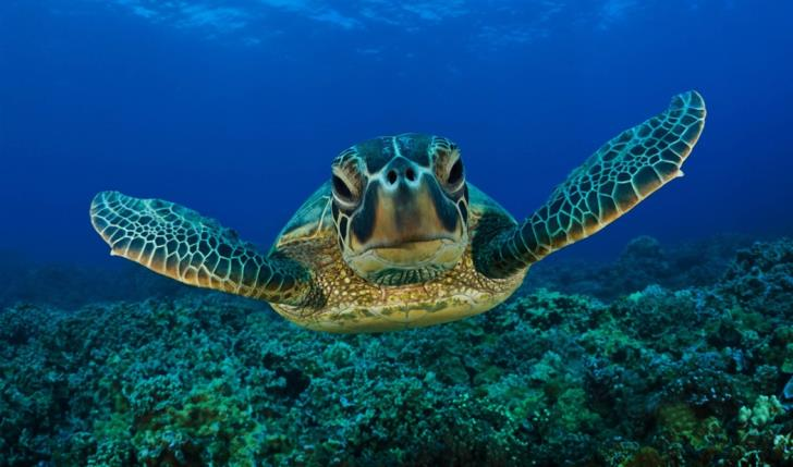 Loggerheads return to same feeding grounds research shows (video)