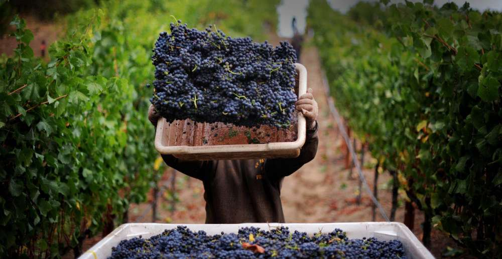 At the crossroads of Cyprus wine history